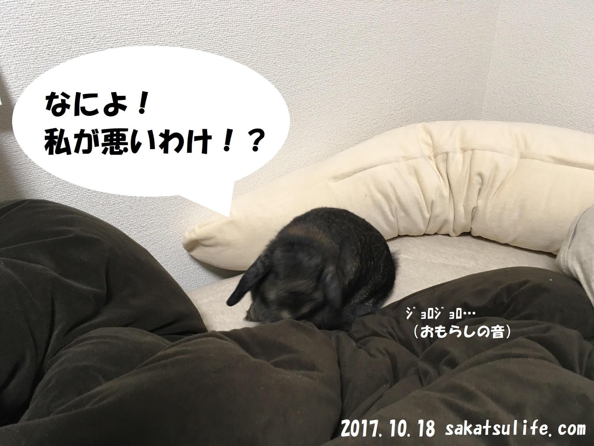 ホーランドロップイヤー静子20171018