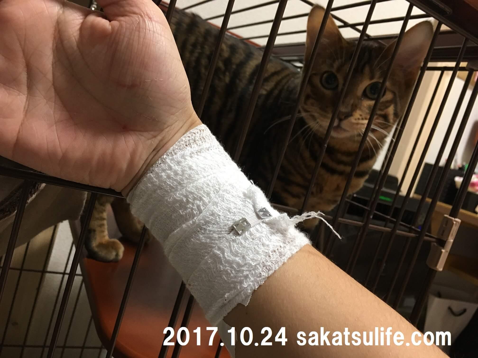 トイガー喜助20171024