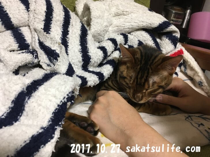 トイガー喜助20171027