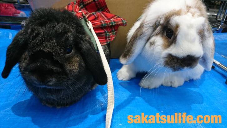 rabbitruruうさんぽ会