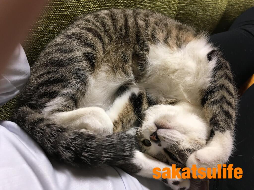 可愛い猫さば